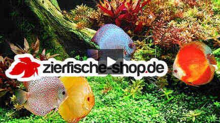 Ihre aquaristik online werbung auf for Zierfisch shop