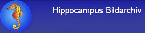 Willkommen bei Hippocampus Bildarchiv - Das Spezial-Bildarchiv für Tier- und Pflanzenaufnahmen!-